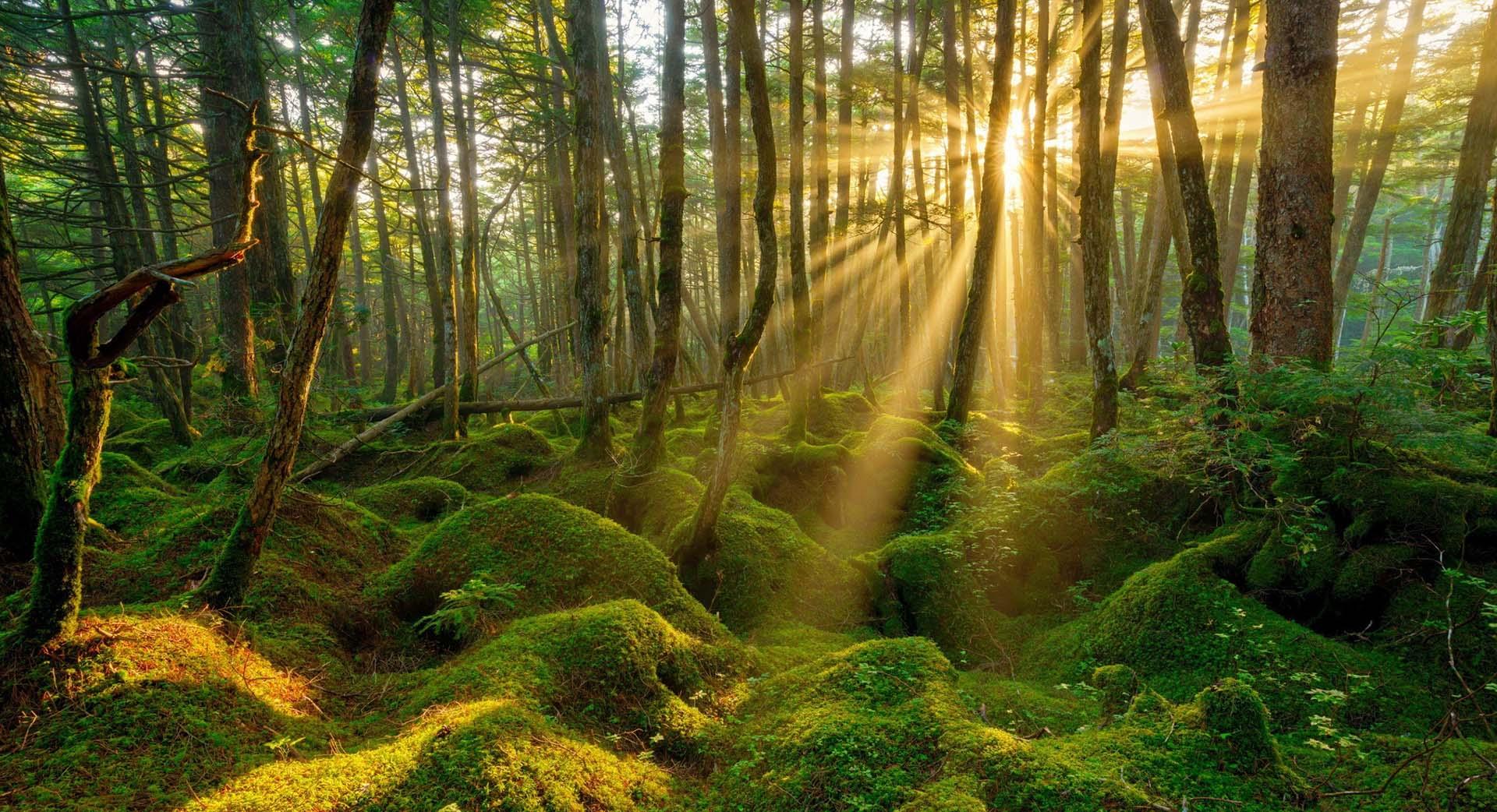 biotop natura